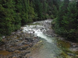 Steelhead & Trout rivers