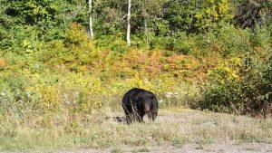 Northwest BC Wildlife