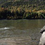 Westcoast Fishing